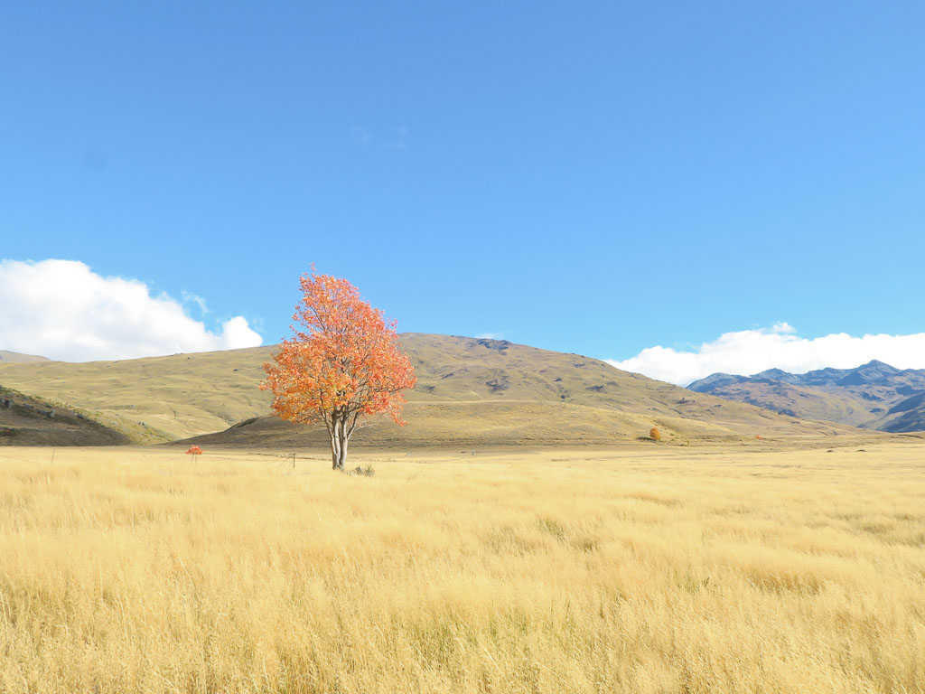 The Nevis Valley in Central Otago New Zealand
