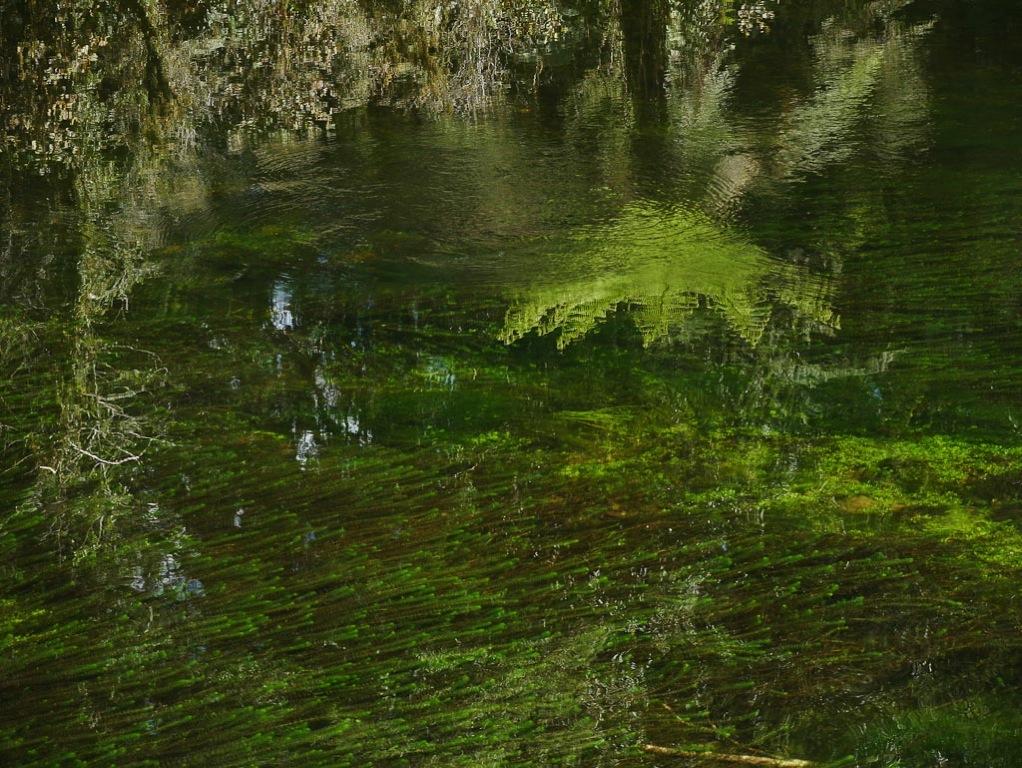 Ellery River South Westland