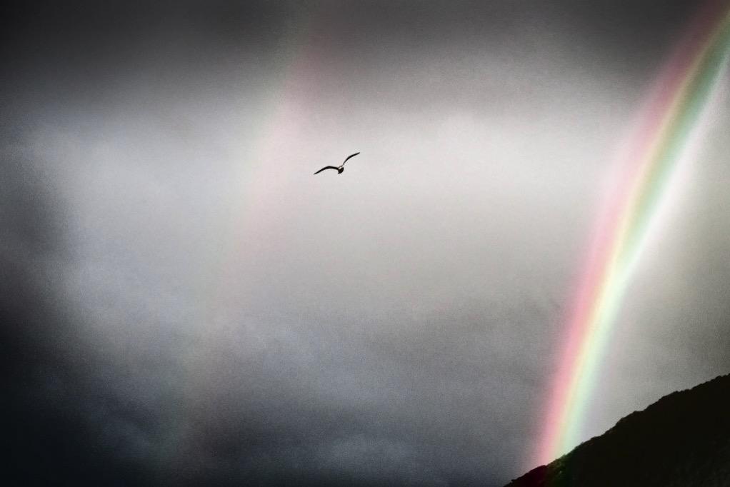 Fiordland, Dusky Sound sea gull and rainbow
