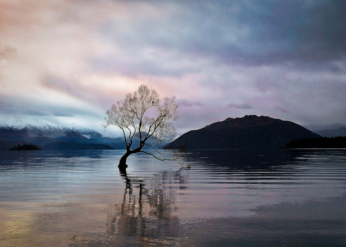 That Wanaka Tree at sunset