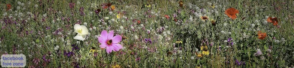 Wild Flowers Wanaka New Zealand