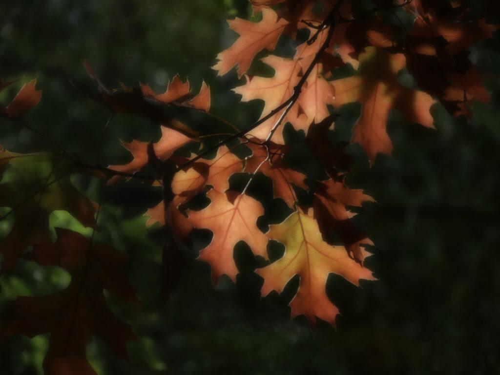 Bright red autumn foliage